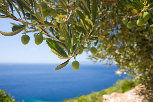 Living Pure Natural Olive Oil
